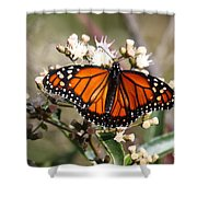Southern Monarch Butterfly Shower Curtain