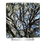 Southern Perspective - Mossy Live Oak Shower Curtain