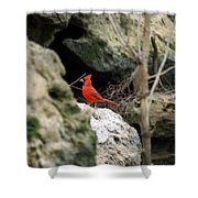 Southern Red Bird By The Flint River Shower Curtain