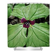Southern Red Trillium Shower Curtain