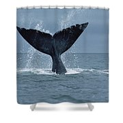 Southern Right Whale Fluke Argentina Shower Curtain