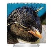 Southern Rock Hopper Penguin Shower Curtain