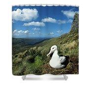 Southern Royal Albatross Shower Curtain