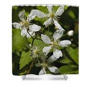 Southern Sawtooth Highbush Blackberry Blossoms - Rubus Argutus Shower Curtain