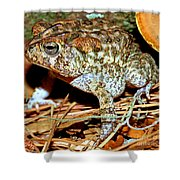 Southern Toad Bufo Terrestris Shower Curtain