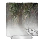 Southern Trees Have Curves Shower Curtain
