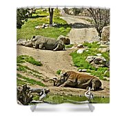 Southern White Rhinoceros In San Diego Zoo Safari Park In Escondido-california Shower Curtain