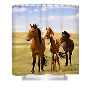 Southwest Wild Horses On Navajo Indian Reservation Shower Curtain