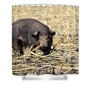 Sow In The Field Shower Curtain