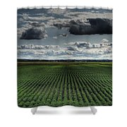 Soy Beans Shower Curtain