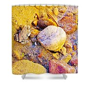Spadefoot Toad Near Stones On Capitol Gorge Pioneer Trail In Capitol Reef National Park-utah Shower Curtain