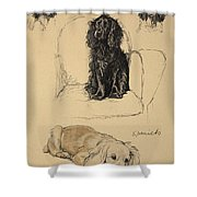 Spaniels, 1930, Illustrations Shower Curtain by Cecil Charles Windsor Aldin