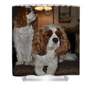 Spaniels Shower Curtain