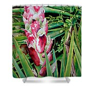 Spanish Dagger IIi Shower Curtain