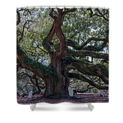 Spanish Moss Draped Limbs Shower Curtain