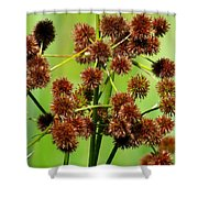 Sparganium Shower Curtain