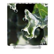 Sparkling Dew On Decorative Kale Shower Curtain