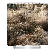 Sparkling Grasses Shower Curtain