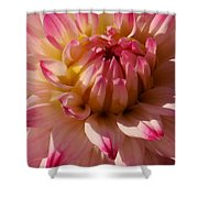 Sparkling Pink Dahlia Shower Curtain