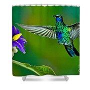 Sparkling Violetear Shower Curtain