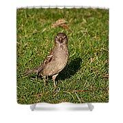 Sparrow 1 Shower Curtain