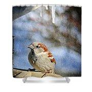 Sparrow 5   Shower Curtain