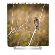 Sparrow In Marshland Shower Curtain by Carolyn Marshall