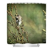 Sparrow In The Weeds Shower Curtain
