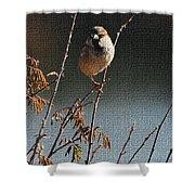Sparrow On A Twig Shower Curtain