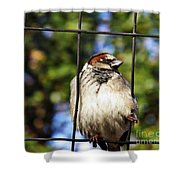 Sparrow On A Wire Fence Shower Curtain
