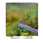 Sparrow On Board Shower Curtain