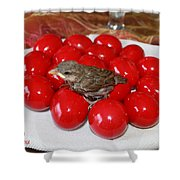 Sparrow On Red Eggs Shower Curtain