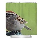 Sparrow Snack Shower Curtain