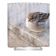 Sparrow - Takeoff Problems Shower Curtain