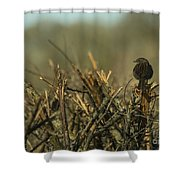 Sparrow Watch  Shower Curtain