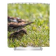 Sparrows Shower Curtain