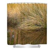 Spartina Grass  Shower Curtain
