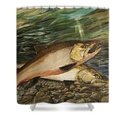 Spawning Salmon Shower Curtain
