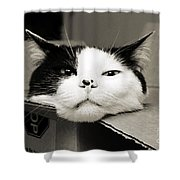 Special Delivery It's Pepper The Cat  Shower Curtain by Andee Design