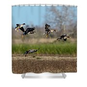 Speckled Belly Geese Landing Shower Curtain