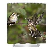 Speckled Hummingbirds Shower Curtain