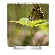 Speckled Wood Butterfly Shower Curtain