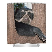 Spectacled Bear In Andean Foothills Peru Shower Curtain