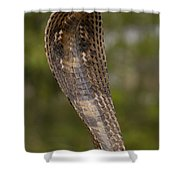Spectacled Cobra Gujarat India Shower Curtain