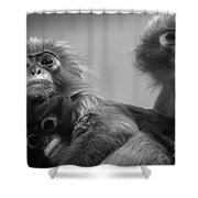 Spectacled Langur Family Shower Curtain