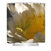 Spectacular Dragon Fruit Bloom Shower Curtain