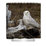 Spectacular Owl Shower Curtain
