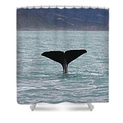 Sperm Whale Diving Shower Curtain