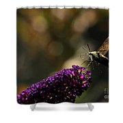 Sphinx Moth On Butterfly Bush Shower Curtain