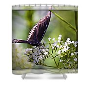 Spicebrush Swallowtail Butterfly Shower Curtain